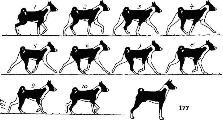 Собака и лошадь быстро бегают